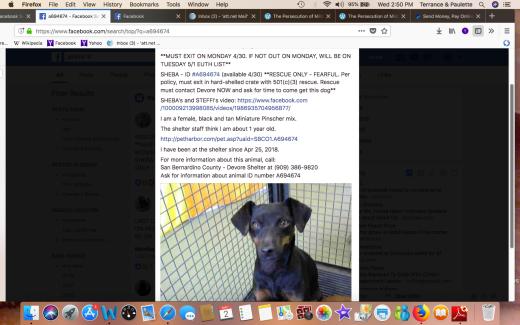 SHEBA RESCUED Screen Shot 2018-05-02 at 2.50.27 PM
