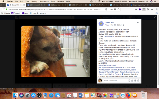TOBY 5 RESCUED Screen Shot 2018-05-30 at 12.56.33 PM