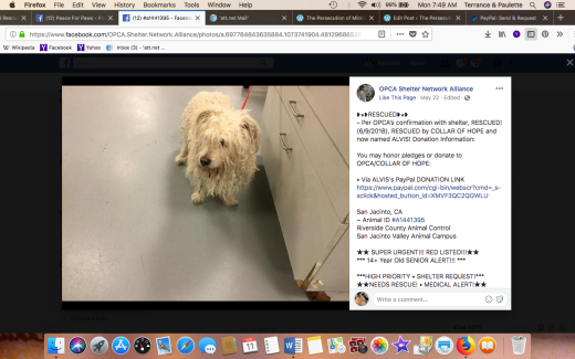 ALVIS RESCUED Screen Shot 2018-06-11 at 7.49.13 AM