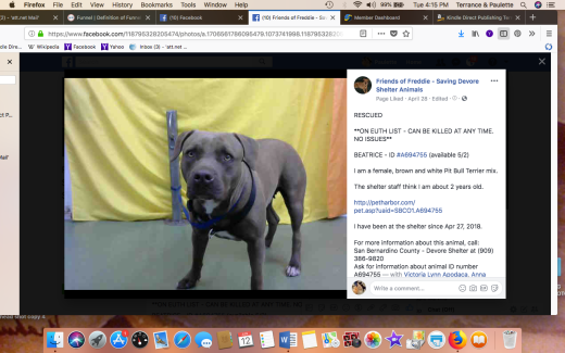 BEATRICE RESCUED Screen Shot 2018-06-12 at 4.15.12 PM