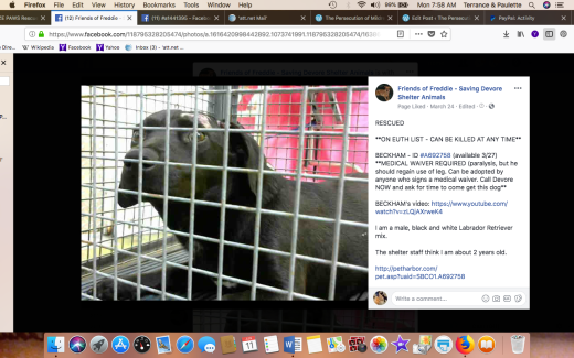 BECKHAM 2 RESCUED Screen Shot 2018-06-11 at 7.58.55 AM