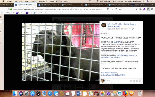 BECKHAM 2 RESCUED Screen Shot 2018-06-11 at 7.58.55 AM