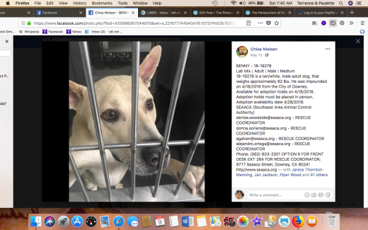 BENNY 2 RESCUED Screen Shot 2018-06-09 at 7.40.19 AM