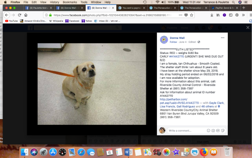 CARLY RESCUED Screen Shot 2018-06-06 at 11.31.01 AM