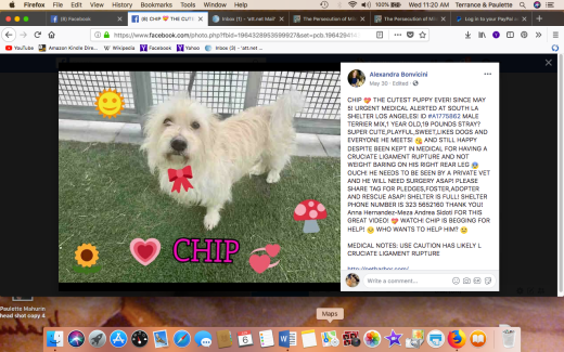CHIP 3 RESCUED Screen Shot 2018-06-06 at 11.20.57 AM
