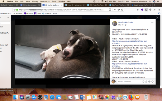 CLASSY & VELVET RESCUED TOGETHER Screen Shot 2018-06-24 at 7.37.55 AM