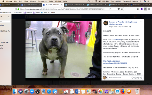 DARLA 3 RESCUED Screen Shot 2018-06-12 at 1.04.53 PM