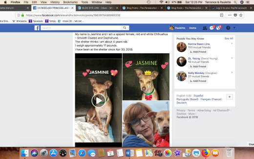 JASMINE 3 SHELTER PHOTO HAS BEEN RESCUED Screen Shot 2018-06-02 at 12.25.37 PM
