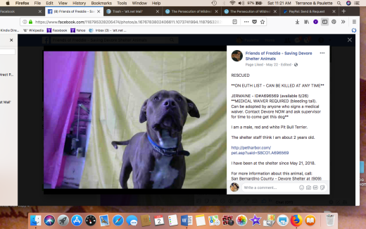 JERMAINE RESCUED Screen Shot 2018-06-02 at 11.21.13 AM