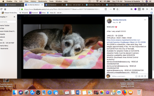 JINGLES RESCUED Screen Shot 2018-06-17 at 7.16.57 AM