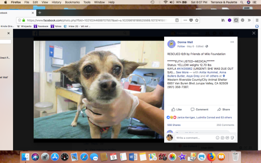 KAYLA 2 RESCUED Screen Shot 2018-06-09 at 8.07.45 PM