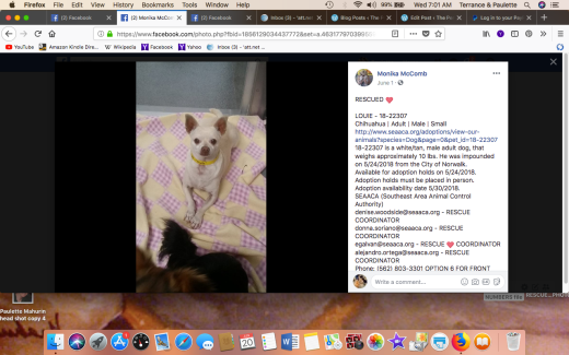 LOUIE 4 RESCUED Screen Shot 2018-06-20 at 7.01.02 AM