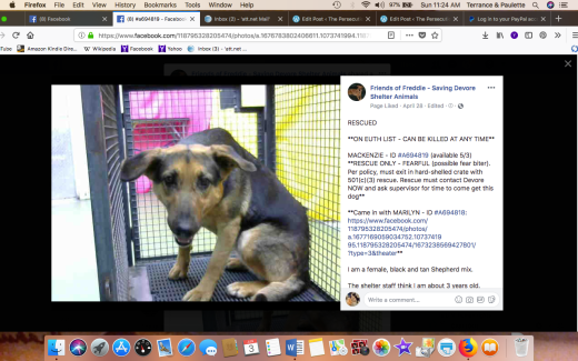 MACKENZIE RESCUED came in wiht sister MARILYN Screen Shot 2018-06-03 at 11.24.39 AM