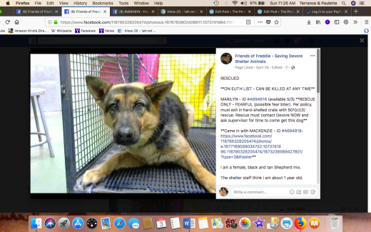 MARILYN RESCUED came with with sister MACKENZIE Screen Shot 2018-06-03 at 11.26.02 AM