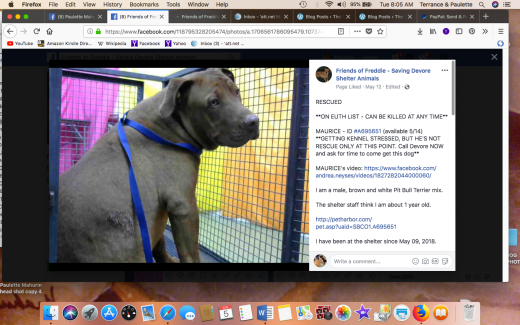 MAURICE 2 RESCUED Screen Shot 2018-06-05 at 8.05.03 AM