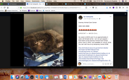 MICKI RESCUED Screen Shot 2018-06-18 at 12.12.34 PM