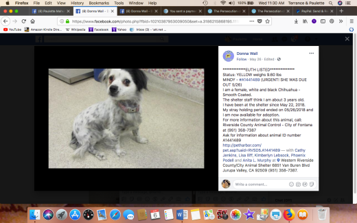 MINDY 2 RESCUED Screen Shot 2018-06-06 at 11.30.42 AM