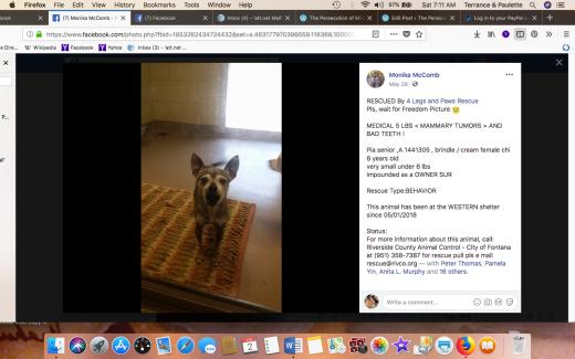 PIA senior dog RESCUED Screen Shot 2018-06-02 at 7.11.42 AM