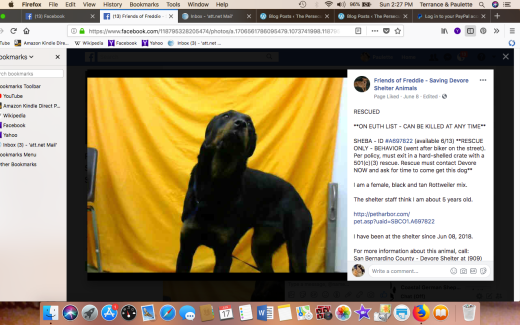 SHEBA 2 RESCUED Screen Shot 2018-06-17 at 2.27.49 PM