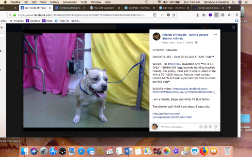 WILMA 2 RESCUED Screen Shot 2018-06-24 at 7.48.35 AM