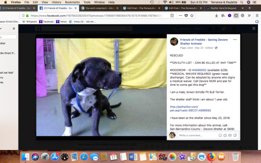 WOODROW RESCUED Screen Shot 2018-06-17 at 4.32.18 PM