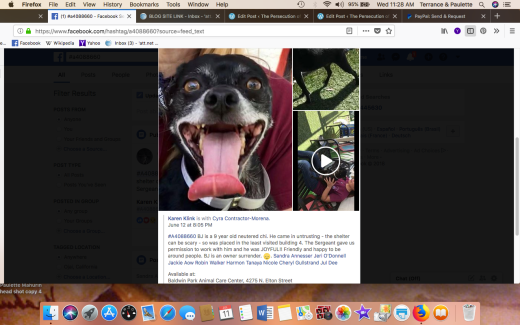 BJ RESCUED Screen Shot 2018-07-11 at 11.28.23 AM