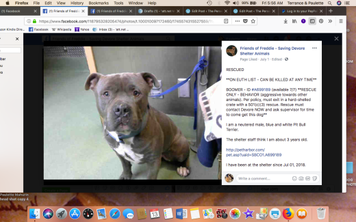 BOOMER RESCUED Screen Shot 2018-07-13 at 5.56.45 AM