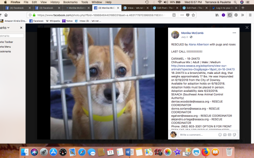 CARAMEL 2 RESCUED Screen Shot 2018-07-11 at 6.57.53 PM
