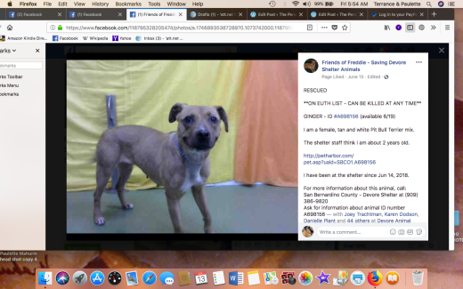 GINGER 3 RESCUED Screen Shot 2018-07-13 at 5.54.56 AM