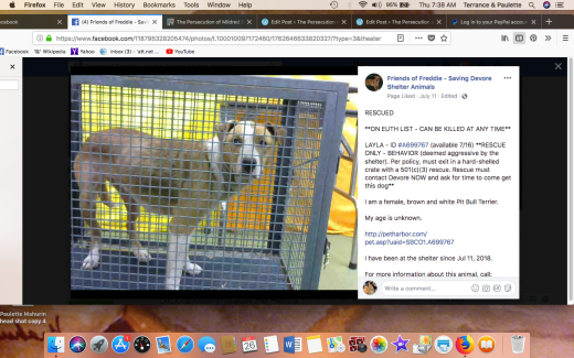 LAYLA 3 RESCUED Screen Shot 2018-07-26 at 7.38.42 AM