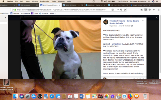 LUCILLE RESCUED Screen Shot 2018-07-19 at 6.00.12 AM