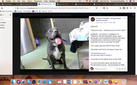 MARBURY RESCUED Screen Shot 2018-07-21 at 4.55.29 AM