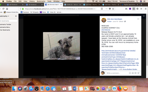 ROXY 2 RESCUED Screen Shot 2018-07-02 at 7.19.03 AM