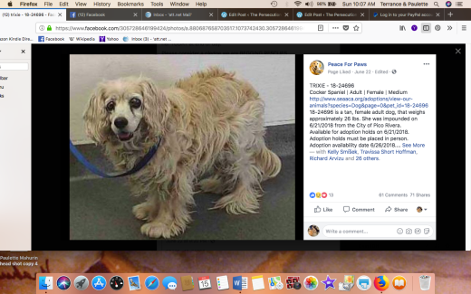 TRIXIE 2 RESCUED Screen Shot 2018-07-15 at 10.07.28 AM