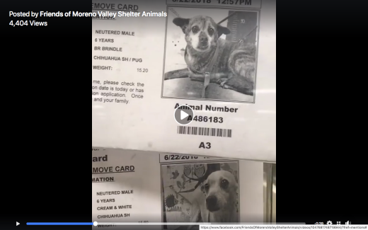 WINSTON 2 & WELSEY RESCUED Screen Shot 2018-07-14 at 12.10.46 PM