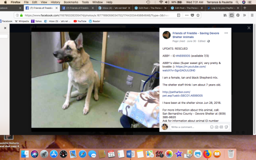 ABBY RESCUED Screen Shot 2018-08-22 at 7.31.52 AM