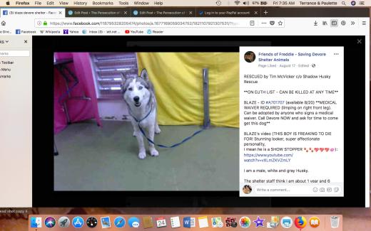 BLAZE RESCUED Screen Shot 2018-08-24 at 7.35.33 AM