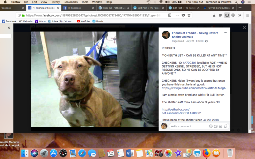 CHECKERS RESCUED Screen Shot 2018-08-30 at 6.04.14 AM