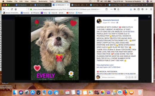 EVERLY RESCUED Screen Shot 2018-08-21 at 6.18.42 AM