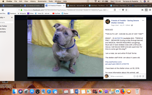 GRANT 2 RESCUED Screen Shot 2018-08-22 at 7.33.06 AM