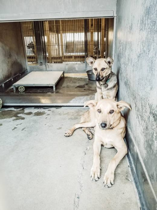 Hamilton & Jackson siblings in kennel together