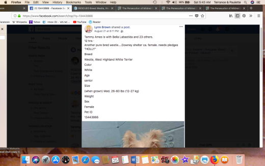 HOLLY 3 KENNEL INFO Screen Shot 2018-08-25 at 5.43.22 AM