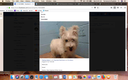 HOLLY 3 KENNEL PHOTO HAS BEEN RESCUED Screen Shot 2018-08-25 at 5.43.32 AM