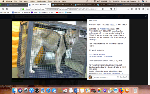 JERICO RESCUED Screen Shot 2018-08-26 at 12.35.34 PM