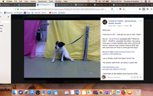 MILLIE 3 RESCUED Screen Shot 2018-08-22 at 4.59.14 PM