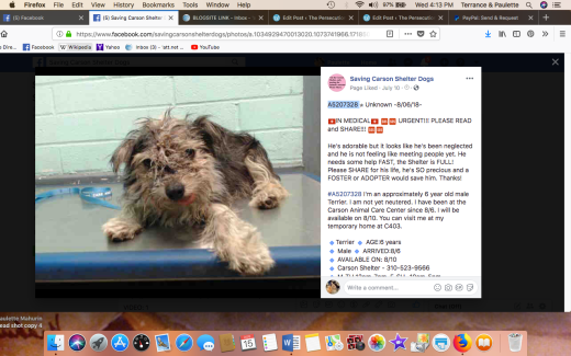 PETER A5207328 RESCUED Screen Shot 2018-08-15 at 4.13.58 PM