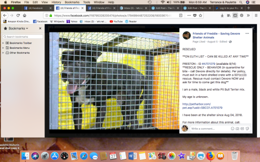 PRESTON RESCUED Screen Shot 2018-08-27 at 6.59.26 AM
