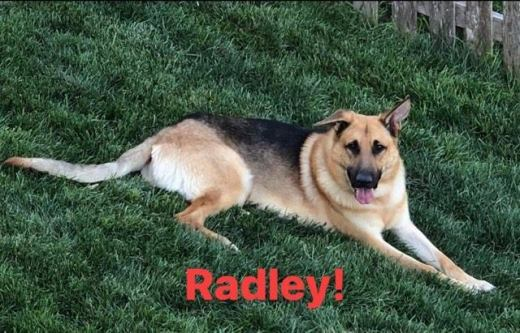 RADLEY FREEDOM