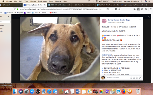 RADLEY RESCUED Screen Shot 2018-08-02 at 6.14.20 AM