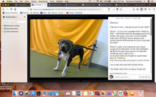 SCOUT RESCUED Screen Shot 2018-08-27 at 7.01.20 AM